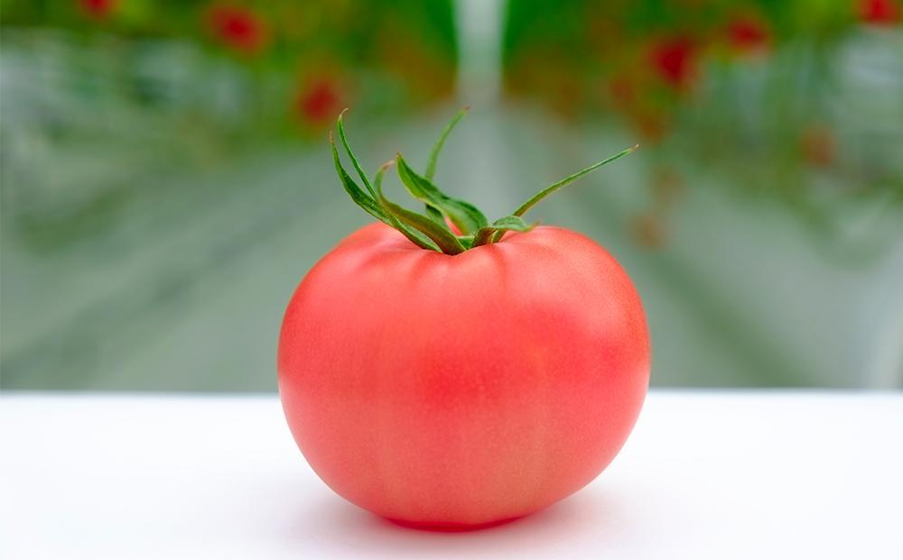 昔ながらの懐かしトマト 凛と 500g