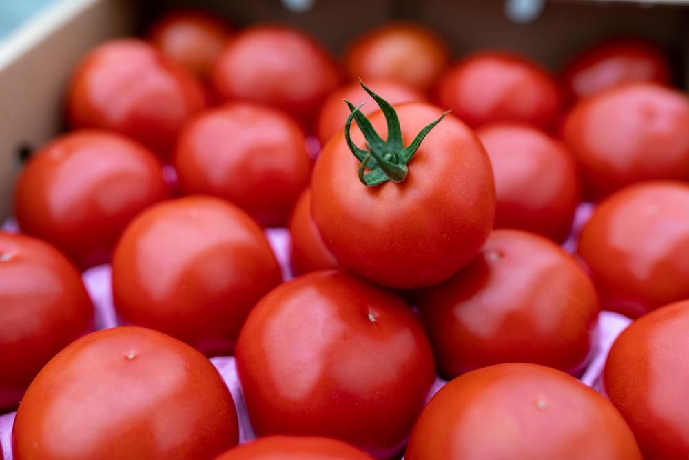 赤さがリコピン満載の証!四万十産トマト「深紅」500g
